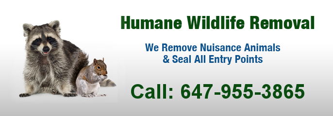 wildlife removal critters