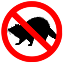 Raccoon control Toronto solutions
